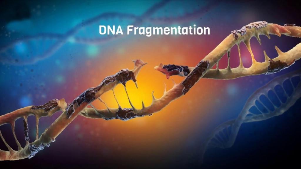 Tinh trung dut gay ADN hay goi la tinh trung phan manh ADN